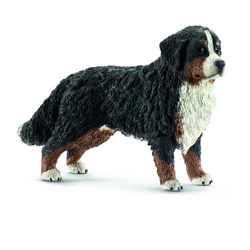 BOVARO BERNESE FEMMINA