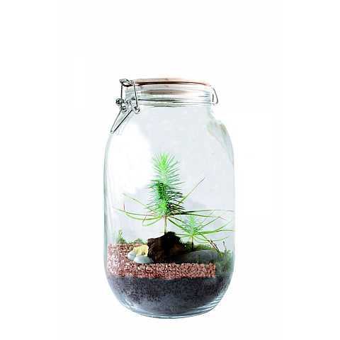 I create my own terrarium: fir tree
