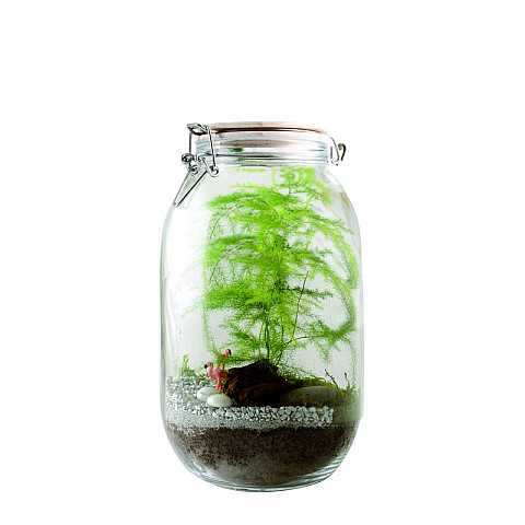 I create my own terrarium: asparagus